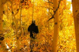 Fall Colors by Danilo Chacon