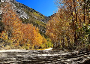 Fall Colors - Photo by Curtis Martin